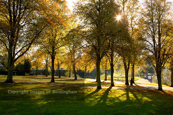 A tree lined walk along the River Severn in the Quarry Park, Shrewsbury, Shropshire, England. Autumn.