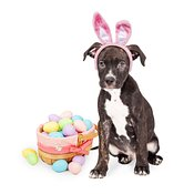 Puppy With Easter Bunny Ears and Basket