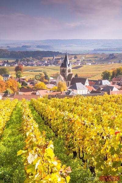 Vineyards in autumn, Ville Dommange, Champagne, France
