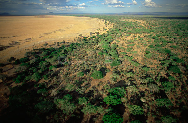 Aerial view of woodland bush and grassland savanna during dry season, Katavi National Park, Tanzania