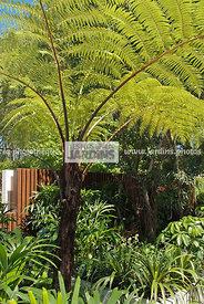 Exotic garden, Tropical garden,Tree Fern