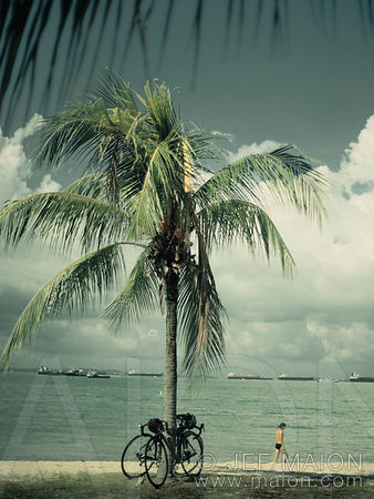 Palm tree and bicycles