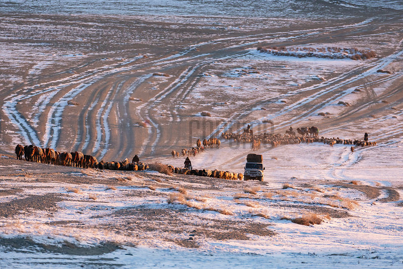 A Migrating Herd of Animals Heads up a Small Pass at Sunrise