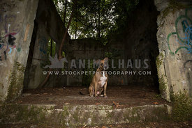 Large brown dog sitting in abandoned mine