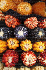 Close up of varieties of maize for sale, Peru