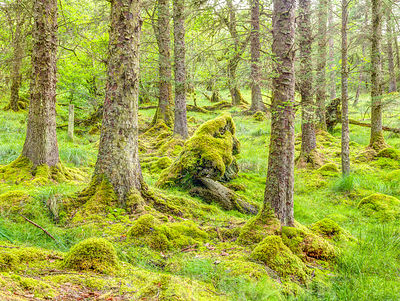 Forest in Loch Awe, Scotland