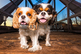 two cavaliers on historic bridge at sunset