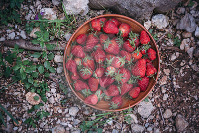 Fresh strawberries in a ceramic bowl outside in the garden