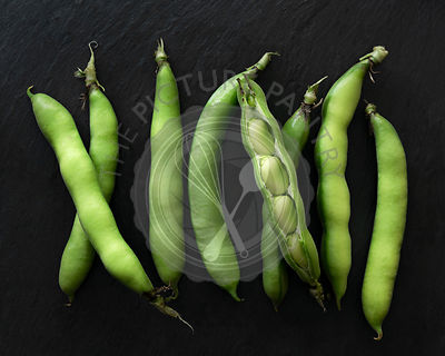 A row of fava bean pods with one pod open.