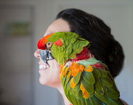 parrot on womans shoulder in profile
