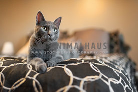 gray cat laying on a black and white comforter on a bed