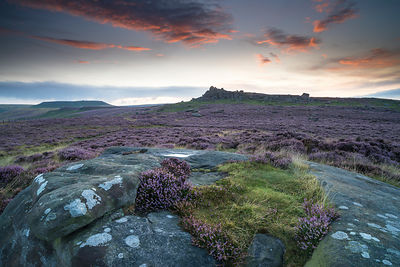 Over Owler Tor pre-dawn heather