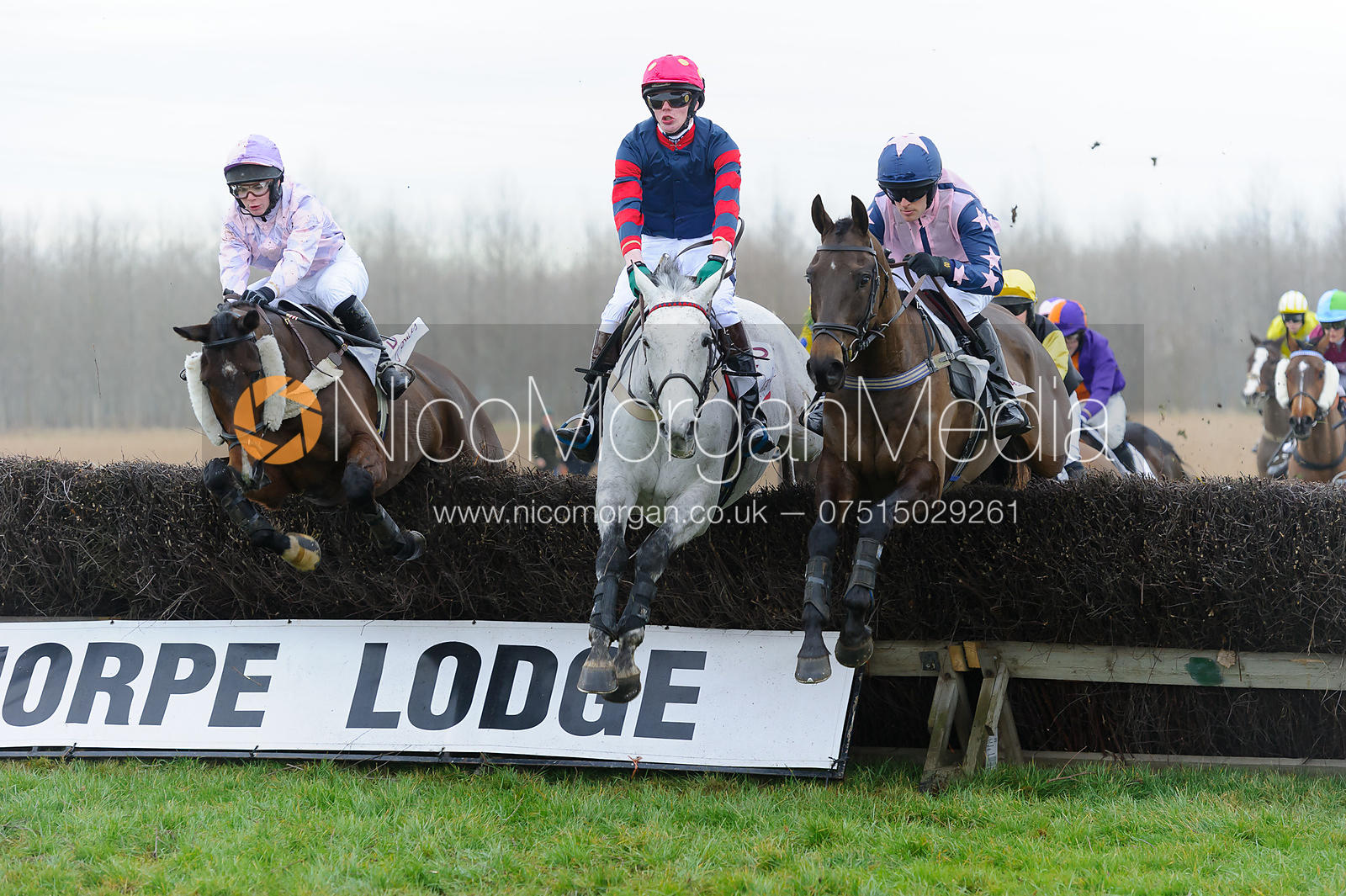 Race 3 - Novice Riders - Midlands Area Club Point-to-point 2017, Thorpe Lodge 29/1