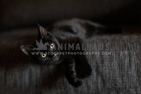 Black kitten laying on a grey couch