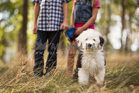 sheepdog puppy in front of two children in woods