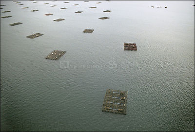 SPAIN Ria de Arousa (River Arousa) -- 15/12/2002 -- Aerial view of mussel beds in the estuary of the River Arousa on the coas...