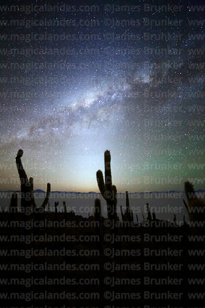 Echinopsis atacamensis (pasacana subspecies) cacti, Milky Way, zodiacal light and airglow, Incahuasi Island, Salar de Uyuni, ...