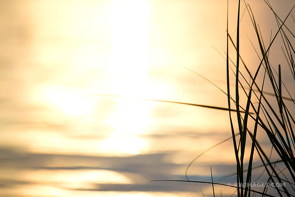 NATURE ABSTRACT BEACH GRASSES ROCK HARBOR ORLEANS CAPE COD