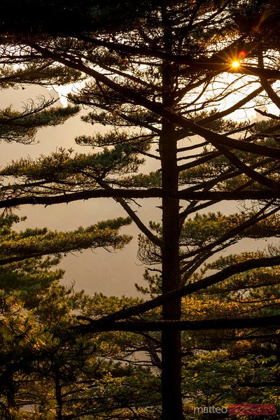 Trees at sunset, Huangshan mountains, China