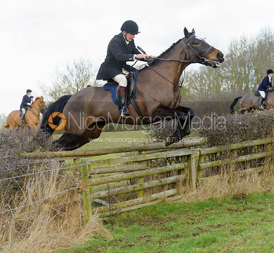 William Bevin jumping a hedge with the The Belvoir Hounds at Ingarsby Hall 3/2