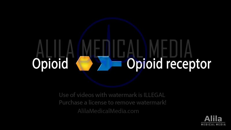 Opioids mechanism of action, NARRATED animation