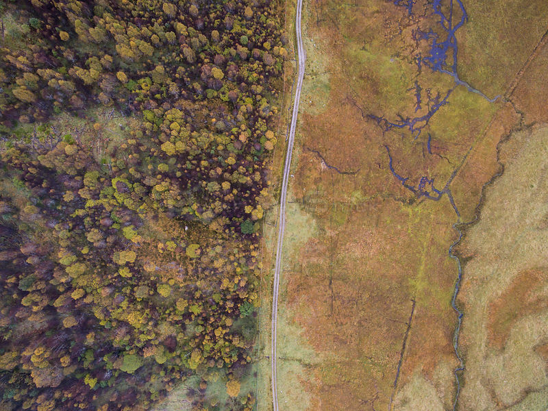 Aerial view of Deer fenced enclosure showing effects of grazing on forest growth, Glen Affric, Scotland, UK, October 2016.