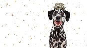 Happy New Year Celebration Dalmatian Dog