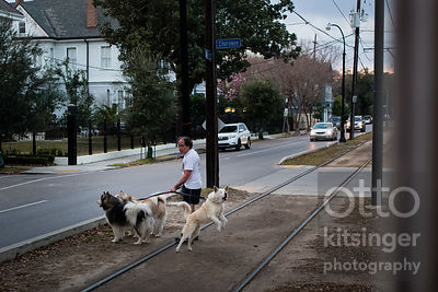 two out of three dogs surveyed have no interest in streetcars