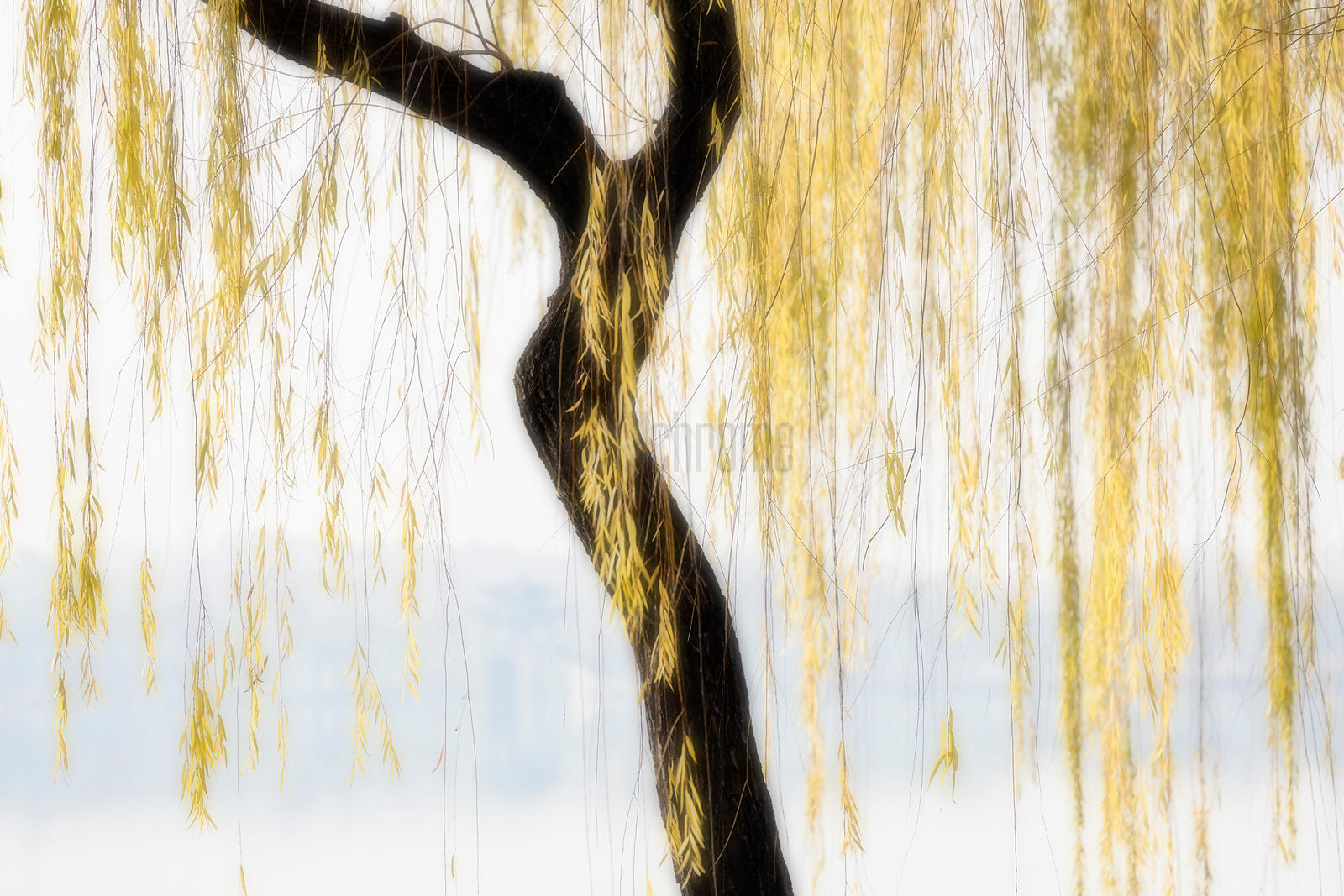 Kunming Lake through Autumn Willow Trees