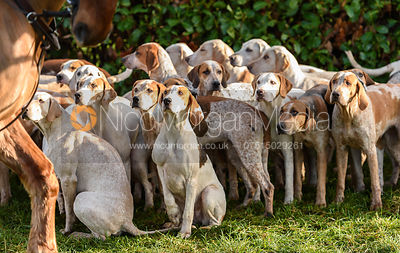 The Quorn hounds at Barrowcliffe
