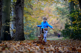 Young boy kicking leaves in woodland autumn Norfolk