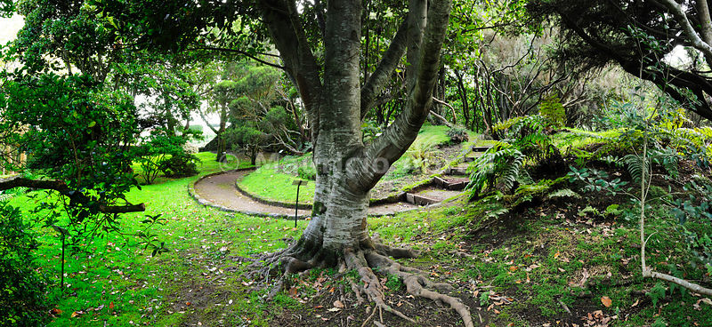 Botanical Garden, Horta. Faial, Azores islands, Portugal
