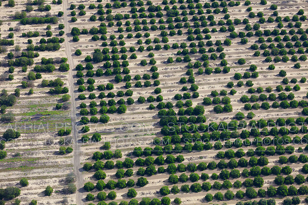 Orange Groves, Florida