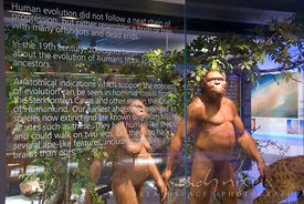 Museum display at Maropeng, showcasing models of a pre-historic human male and female in a bush setting, with information abo...