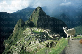 The Inca city of Machu Picchu, Huayna Picchu peak and llama (Lama glama), Peru