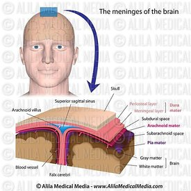Meninges do cérebro