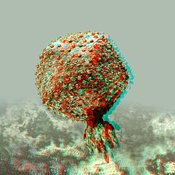 Anaglyph of Bacteriophage P22