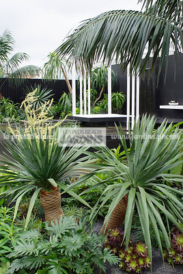 Jardin exotique, Jardin contemporain. Dracaena draco, Dragon tree. Philodendron bipinnatifidum, Designers : David Cubero et J...