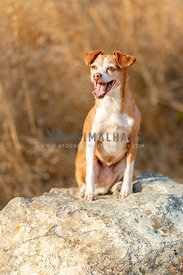 Small mixed breed dog on boulder