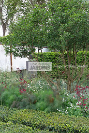 Border, Columbine, Country-style garden, Digital, Foliage