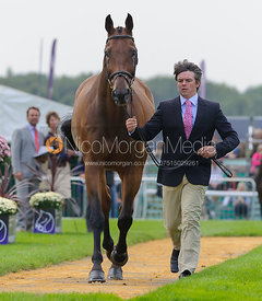 Jim Newsam and MAGENNIS - The first vets inspection (trot up),  Land Rover Burghley Horse Trials, 3rd September 2014.
