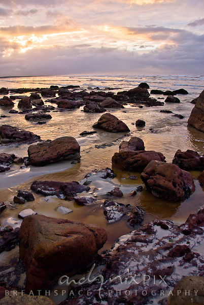 Red fynbos tannin-tinted water flowing into sea around rocks, sunrise illuminating clouds and refecting off watrer, pink light