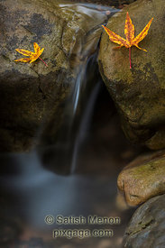 Falls Leaves and Waterfall, Uvas Canyon, Morgan Hill, CA, USA