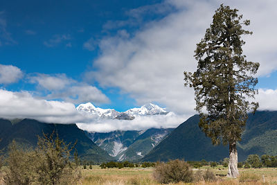 Mountains and tree, Lake Matheson