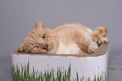 Cat lying in scratcher enjoying catnip