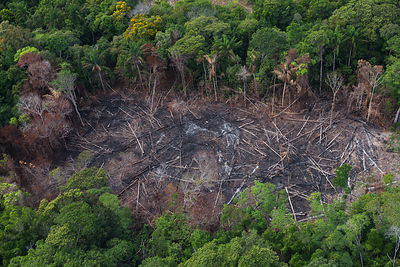 Slash and burn of tropical rainforest to make way for Amerindian agriculture, Rurununi savanna, Guyana, South America