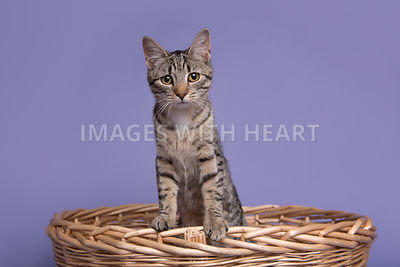 Kitten standing inside basket with paws on side