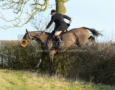 jumping a hedge near Ladywood - The Cottesmore at Priory Farm