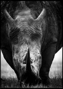 4696-Horn_of_white_rhino_South_Africa_2008_Laurent_Baheux