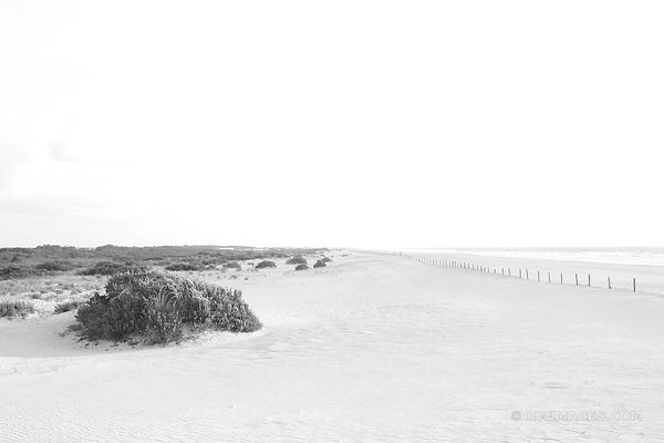 BEACH ASSATEAGUE NATIONAL SEASHORE MARYLAND BLACK AND WHITE